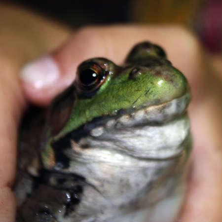 un ragazzo orgoglioso mostra la rana grassa che egli ha appena catturato