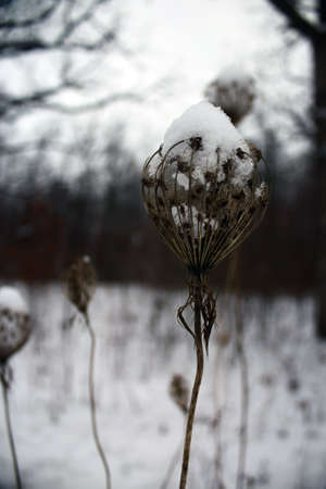 a weed is covered with snow