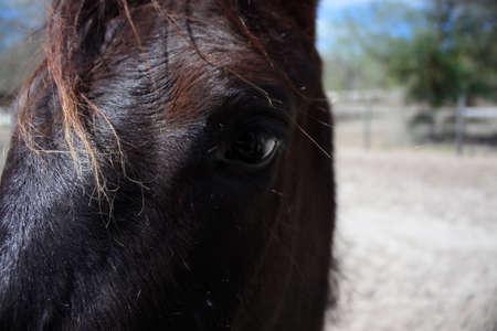 un cavallo si blocca in fattoria