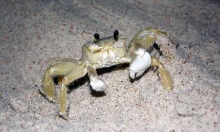 a crab hangs out in the sand at the beach