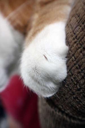 Zampa di gatto Archivio Fotografico