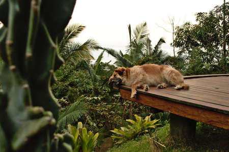 dog lying peacefully in a wood near deck Stock Photo