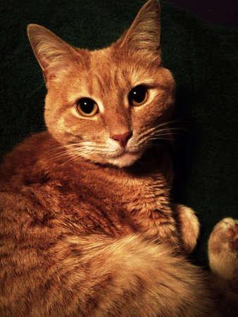 felines: Cat.