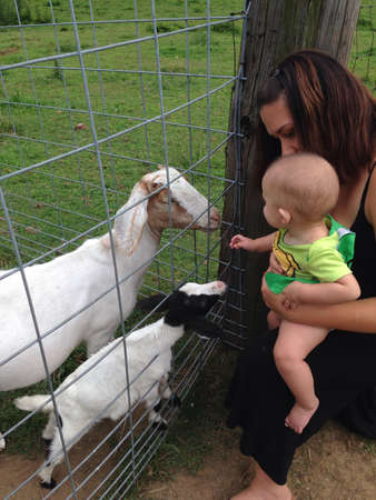 fence: Mothers and babies of goats and people.