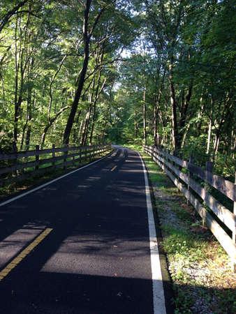 fence: Path through woods.