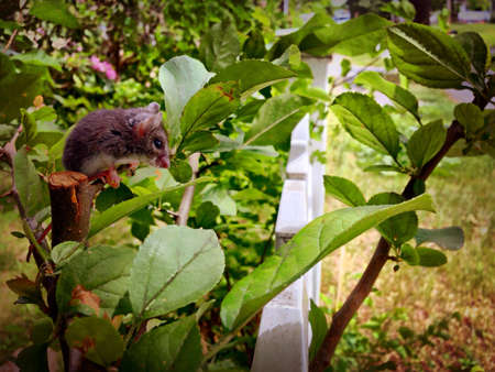 fence: Mouse sitting on plant.