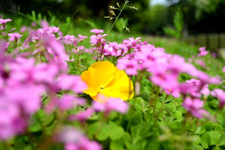 Constrasting yellow flower