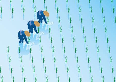 green fields: Rice planting