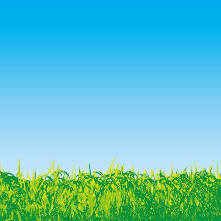 rice fields Vector Illustration