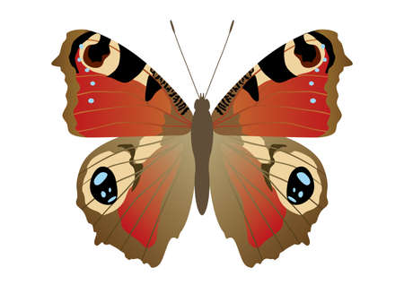 antennae: Butterflies that live in Japan Illustration