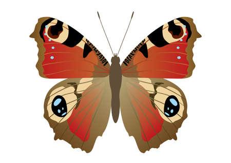 Butterflies that live in Japan Vetores