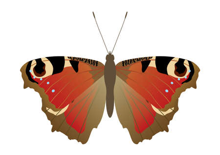 Butterflies that live in Japan Illustration