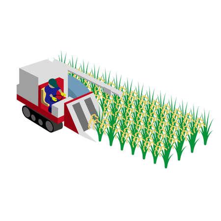 Rice reaping work in autumn vector illustration Illustration