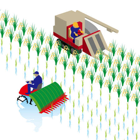 Rice planting and rice reaping Stock Illustratie