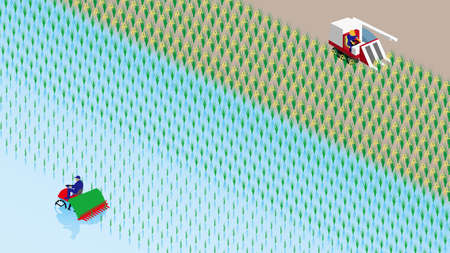 Rice planting and rice reaping Vector Illustration