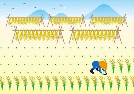 Rice reaping work in autumn Illusztráció