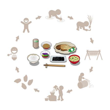 Illustration of Japanese set menu and rice production