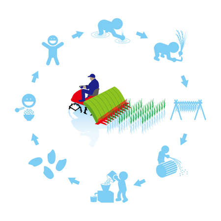 Rice production cycle Stock Vector - 112803173