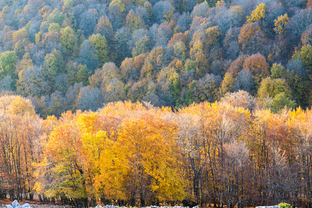 pontine: Autumn colors Stock Photo