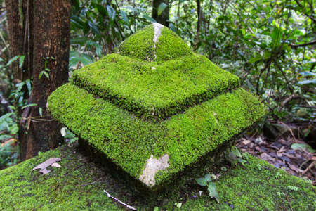 king fern: Old pagoda cover by moss at Phlio waterfall national park , Chanthaburi , Thailand.