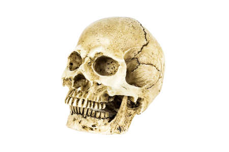 Human skull isolated on white background, Clipping path.
