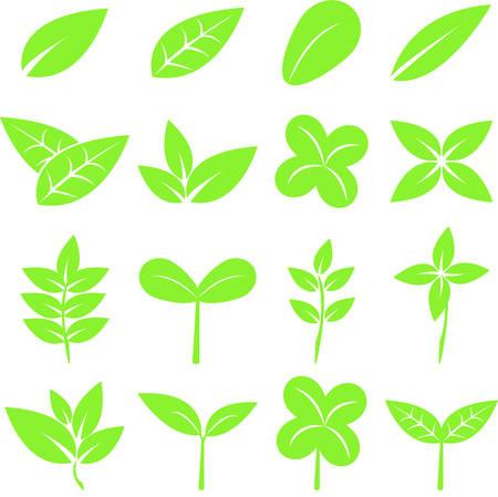 Set of green leaves plant design elements, natural symbol vector icon set, illustration. Illustration