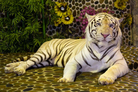 White bengal tiger in the zoo. Pattaya, Thailand.