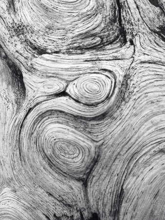 tropical tree: Textura �rbol tropical