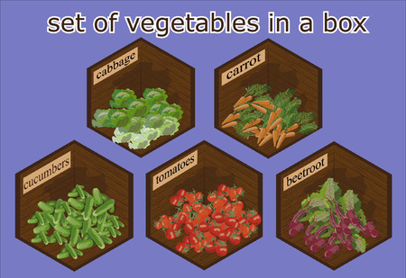 context: vegetables set in the context of a perspective wooden box Illustration