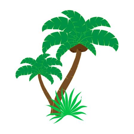 Illustration of palm tree on a white background. Illustration