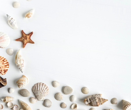 Wooden background white with shells. Frame with seashells on a white background. Sea