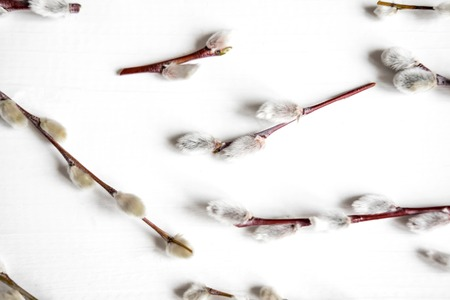 Pattern with natural willow branches on a white background. Spring pattern.