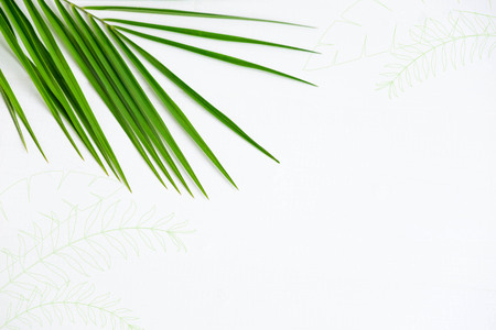 Frame for banner with palm leaf on white background. Tropical banner. Palm leaf on white wooden background.