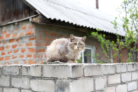 Old homeless street cat that sits on the fence. A cat that is cold.