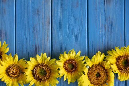 Autumn banner with flowers of sunflower on a blue wooden background. Frame for greeting card with flowers of sunflower.
