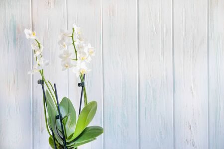 Photo of a white orchid flower on a white wooden background