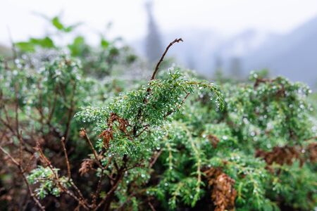 Mountain vegetation after rain close-up. Photo of a tourist traveler in the mountains.