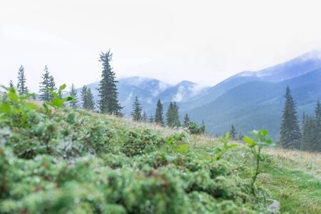 Photo from travel in the mountains. Mountain landscape with fog, needles. Beautiful mountains traveling