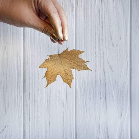 A female hand that holds a golden autumn maple leaf. Фото со стока