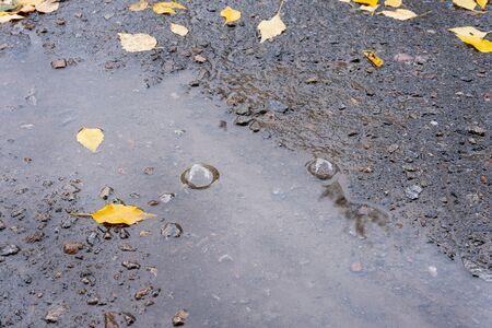 A puddle with rain bubbles and autumn yellow leaves. Autumn rains Фото со стока