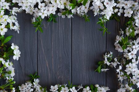 Frame of branches of blooming cherry on a gray wooden background. Spring background with flowers Фото со стока