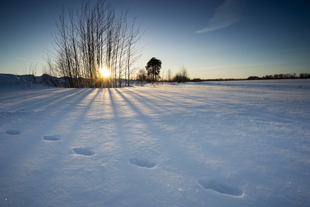 Animal footprints in the snow in the rays of the sun in winter. photo