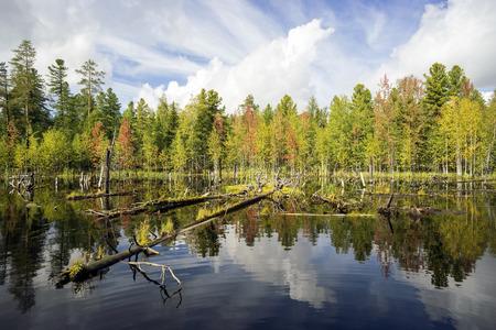 boron: Beautiful landscape on the shore of lake forest. Stock Photo