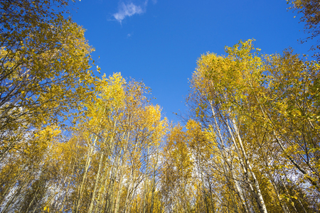 yellow trees: Beautiful autumn day with yellow trees and blue sky. Stock Photo