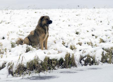 puta: Perro sin hogar que se sienta en la orilla del lago.
