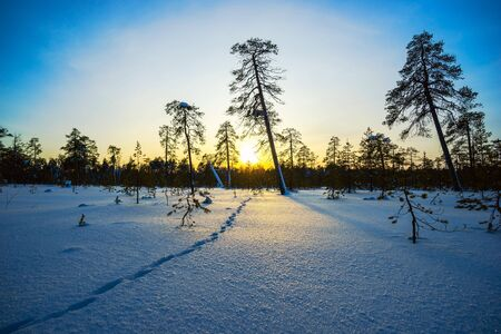 ray trace: Winter sunset, animal footprints in the snow.