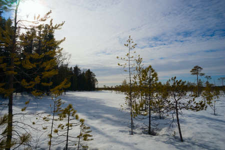 thawed: On the edge of the winter forest with long shadows on white snow.