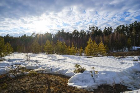 thawed: The spring sun warms the snow near the forest. Siberia , Yugra.