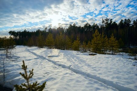 warms: The spring sun warms the snow near the forest. Siberia , Yugra.