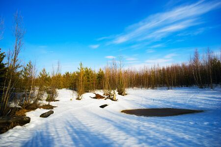 thawed: Spring thawed patches in a forest glade with long shadows from trees. Stock Photo